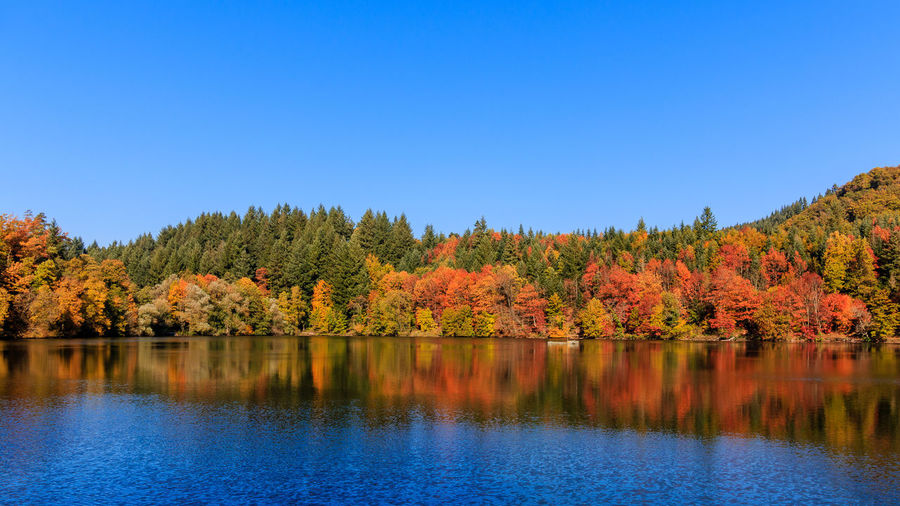 Bergsee im Herbst Schwarzwald Autumn Beauty In Nature Black Forest Change Clear Sky Day Forest Lake Leaf Nature No People Outdoors Reflection Scenics Sky Tranquil Scene Tranquility Tree Water