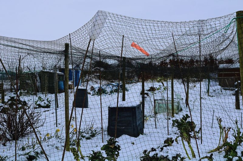Allotment Snow