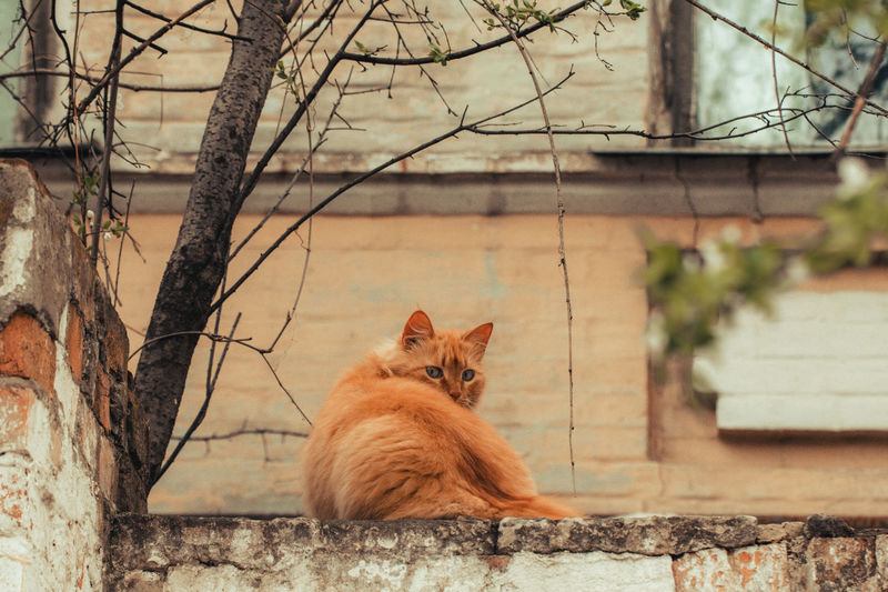 Portrait of a cat on a tree