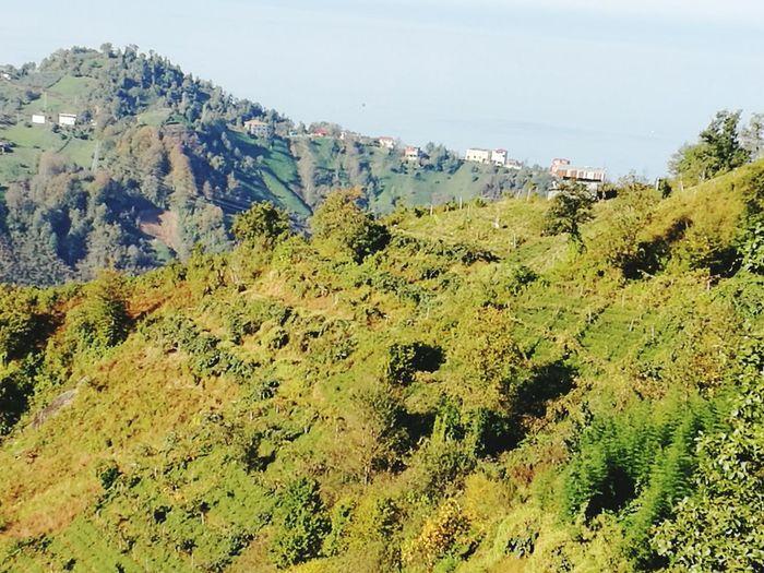 Koyumde bi manzara Nature Beauty In Nature Travel Destinations Day No People Outdoors Close-up First Eyeem Photo