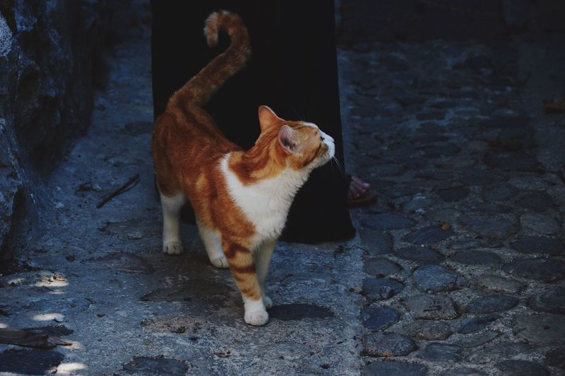 Low Angle View Of Cat Standing By Woman At Pavement