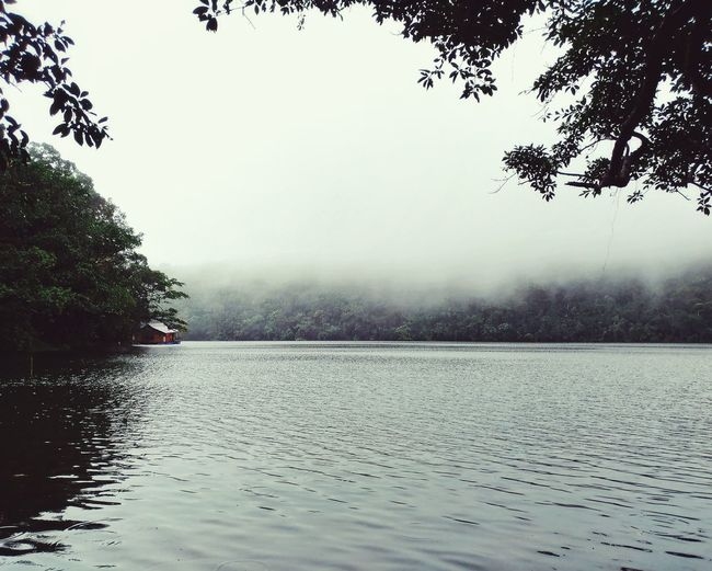 Bulusan Lake The Great Outdoors - 2017 EyeEm Awards Eyeem Philippines EyeEm Best Shots CapturedByZ3N Mobile Photography Beauty In Nature Philippines Bulusan Sorsogon Nature Lake Fog Nature Tree Water Outdoors Beauty In Nature Freshness Scenics