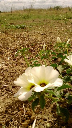 Xanana Color Portrait Serido Sertão Semfiltro Flowers Flores Fulo EyeEm Flower Flowerporn