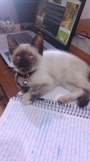 Ayesha Cat ♡