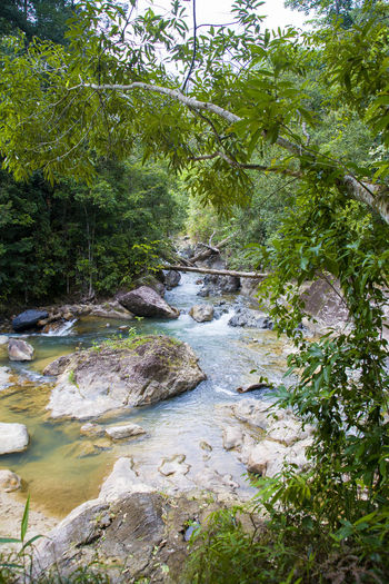 Beauty In Nature Flowing Flowing Water Forest Green Color Growth Idyllic Lush Foliage Nature No People Plant Remote River Rock Rock - Object Scenics Stream Sunny Day Tranquil Scene Tranquility Tree Water