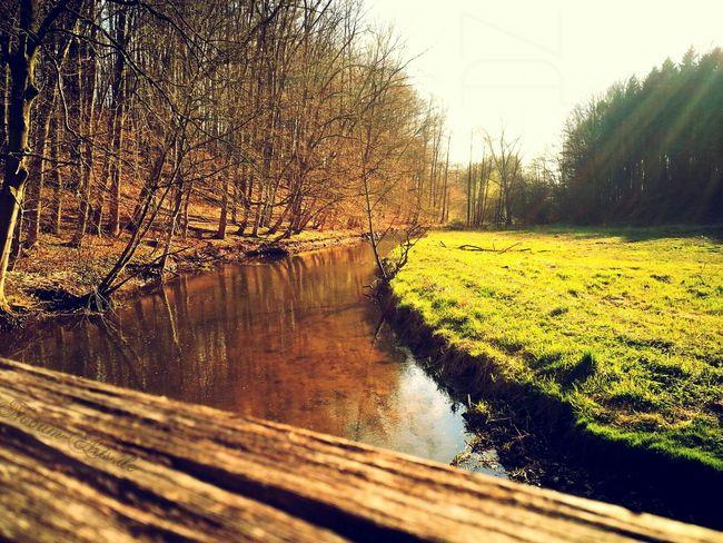 Natur Natur Pur Natur Genießen Tal