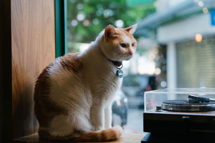 Animal Themes Cat Day Domestic Animals Mammal One Animal Pets