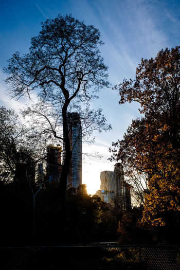 Central Park Central Park - NYC Manhattan New York City Trees Architecture Branch Building Exterior Built Structure City Day Highrise Nature No People Outdoors Sky Tree