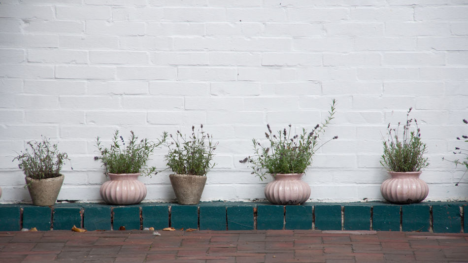 Arrangement Group Of Objects Growth Large Group Of Objects Many In A Row No People Pot Plant Potted Plant Wall - Building Feature