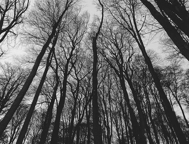 Trees Forest Bnw Blackandwhite Bnwlover Bnw_captures Trip Photo Photooftheday Instatrees Instaforest Insta Instalike Instagood Instadaily Instamood InstaVsco Photography Phone Huawei P8 P8lite VSCO Vscocam Vscotrees vscogood vscophile vscoczenature vscocze vscoczech
