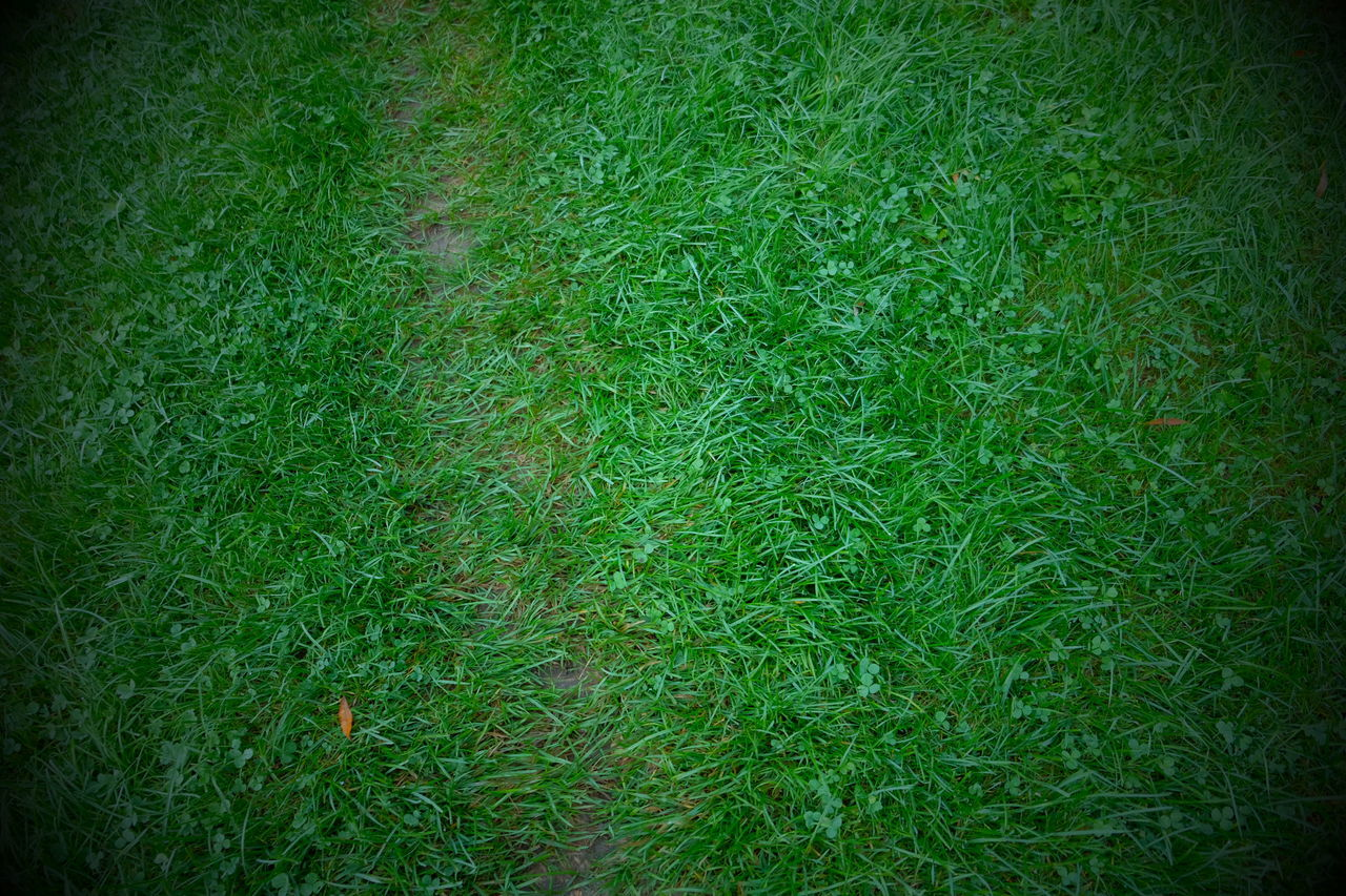 grass, plant, green color, backgrounds, full frame, land, nature, growth, vignette, no people, field, day, high angle view, outdoors, beauty in nature, tranquility, lush foliage, foliage, lawn, close-up