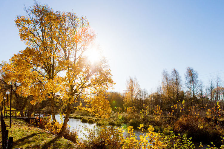 Autumn Backlight Beauty In Nature Clear Sky Day Nature No People Outdoors Sweden Tree Water