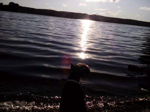 Собака,простое фото.Но очень нравится