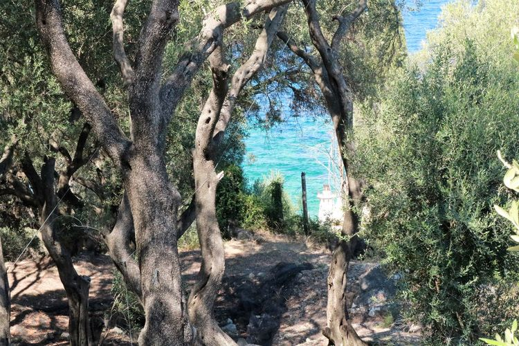 Beauty In Nature Day Forest Landscape Nature No People Olive Trees Outdoors Plant Scenics - Nature Sunlight Tree