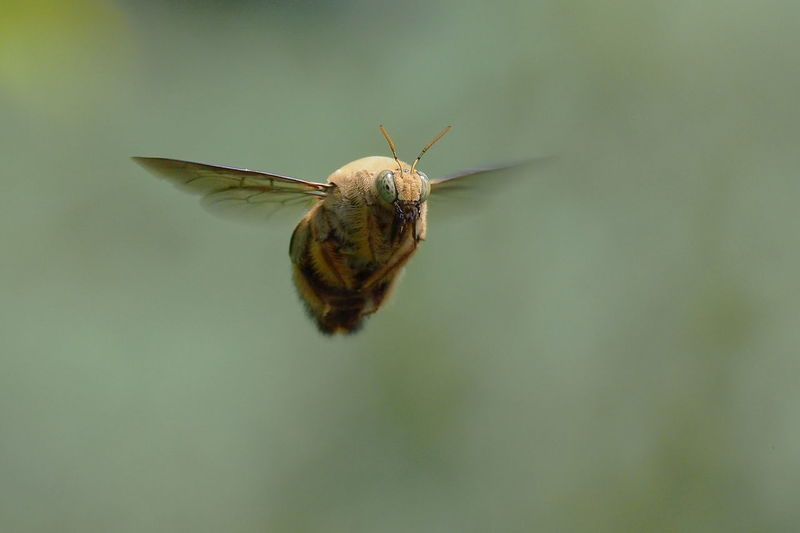 Close-Up Of Insect Flying In Mid-Air