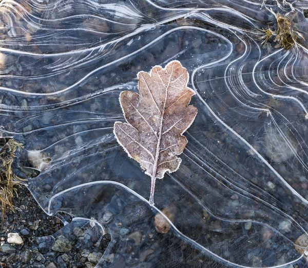 A frosty leaf upon a frozen lake shore on a cold Winters morning Autumn Frost Frozen Frozen Lake Ice Ice Pattern Weather Winter Arctic Blast Beauty In Nature Change Chilly Close-up Cold Encased In Ice Fragility High Angle View Leaf Nature No People Northern Winter Outdoors Season  Spring Water