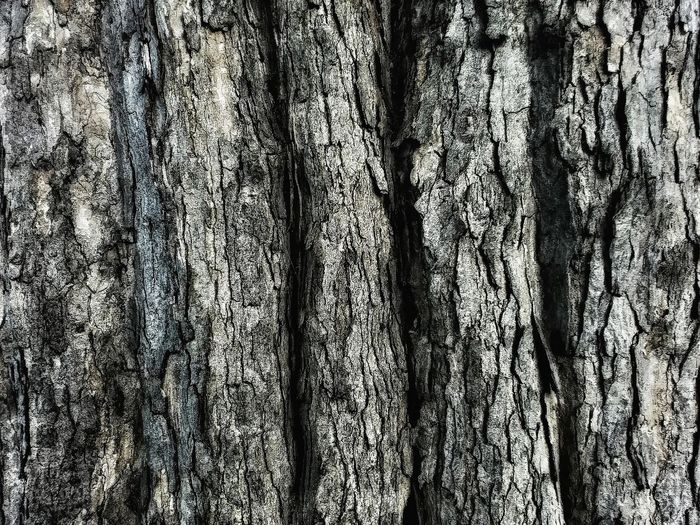 Bark Tree Naturelovers Nature_collection Nature Photography Nature Beauty In Nature Backgrounds Bark Texture Bark Close-up Texture Design Stucture Day No People Non Urban Scene Non-urban Scene This Week On Eyeem Gray Gray Color Shades Close-up Detail Soft EyeEm Gallery