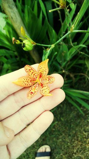 flor Flor Human