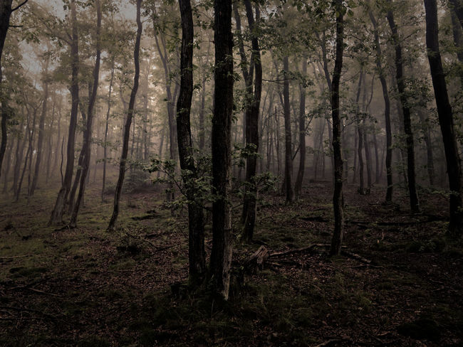 Nature Nature Photography Trees Wanderlust Adventure Beauty In Nature Claudetheen Forest Moody Nature Tree Vintage