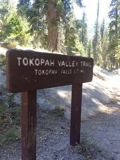Tokopathfallstrail Tokopah Falls Sequoia National Park Sequoia Trekking