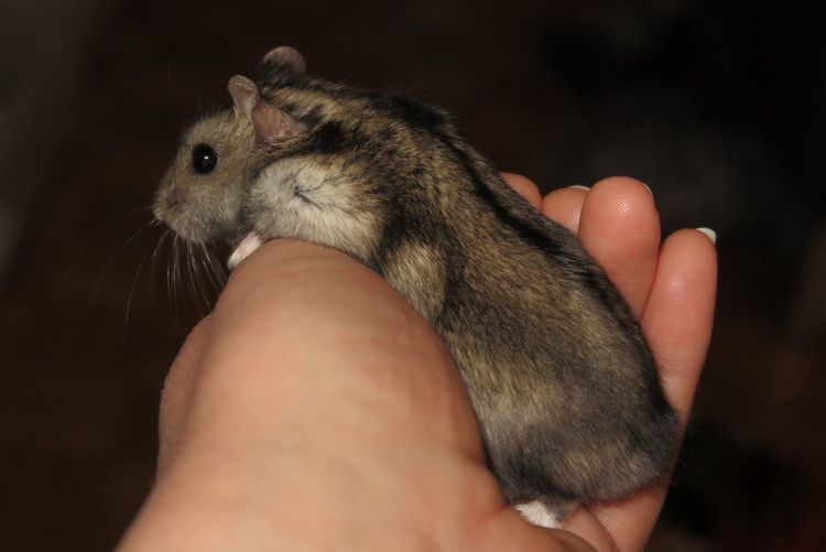 Hamsters Animals Pets Photography Cuty 💟 On My Hand Switzerland