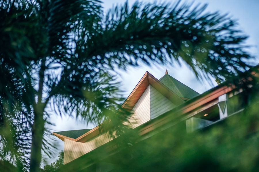 A tropical low angle view of a rooftop of a resort at the Koh Phangan. Palm tree in the lawn of the resort, a seen through from tropical grass. ASIA Exterior Green Happy Holiday Koh Phangan Leafs Nature Palm Tree Tourist Tree Cafe Club Colorful Destination Island Landscape Night Ocean Outdoors Phangan Resort Restaurant Tourism Tropical