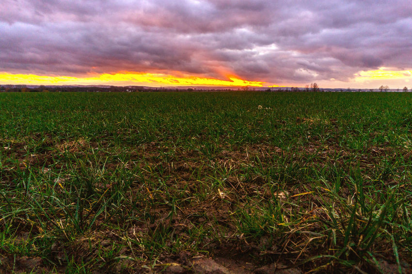 Agriculture Beauty In Nature Cloud - Sky Day Field Grass Growth Landscape Nature No People Outdoors Plant Rural Scene Scenics Sky Storm Cloud Sunset Tranquil Scene Tranquility