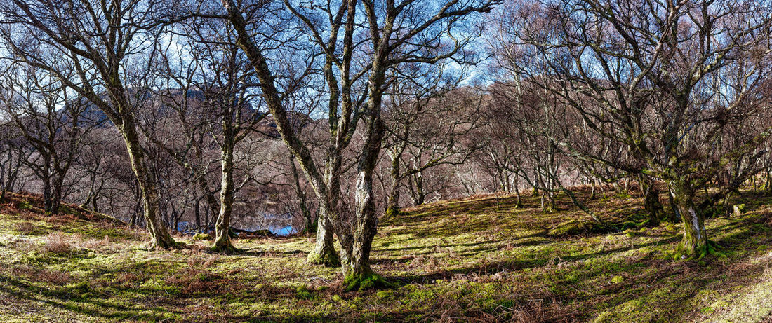Photo Merge Photography Green Color Scotland Highlands Sky And Clouds Day Grasses Are Beautiful Too No People River Ewe Shadows Springtime Trees Without Leaves Leaves Tree Trunk Treelined Growing Greenery Bark Fungus Flora Woods
