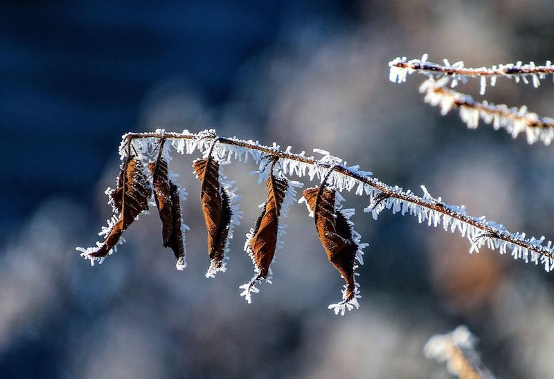 Beauty In Nature Hoarfrost Hoarfrost On Plant Nature Winter Winter Leaves Winterscapes Wintertime