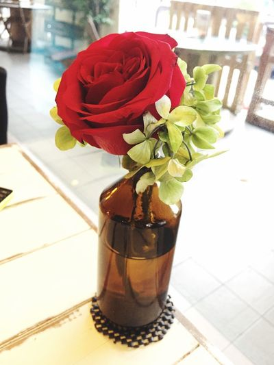 Flower Indoors  Table Vase Freshness Potted Plant Petal Plant Flower Head Fragility No People Nature Red Leaf Day Close-up Beauty In Nature
