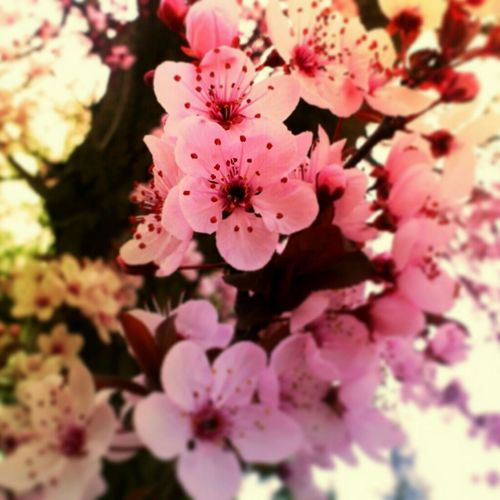 Walking Around Flowers Nature Florecitas Eyem Nature Lovers