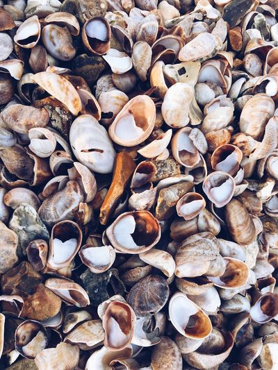 Shells Sea Shells Color Palette Outdoors Beach