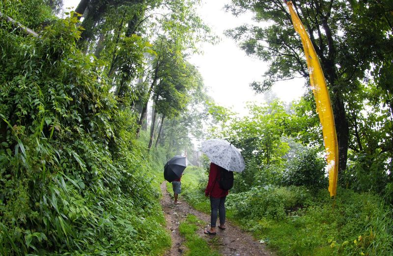 Forest Nature Outdoors Friends Backpack Togetherness Beauty Of Nature Roadlife Yellow Cloth Travel Hillside Fisheye Canon Darjeelingdiaries