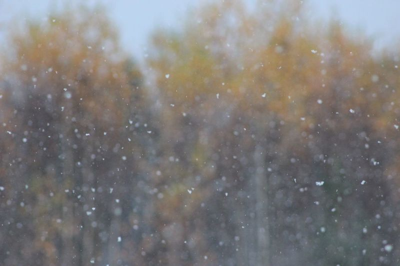 First snowfall No People Nature Full Frame Outdoors Backgrounds Beauty In Nature Day Space Sky The Week On EyeEm Fall Colors Weather Photography Snowstorm Fall Beauty Tree Tranquil Scene Background Tranquility Soft Colors  Soft Focus Snowflakes White And Orange Unfocused Weather Snowfall Perspectives On Nature Shades Of Winter Autumn Mood