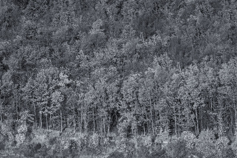 Black And White Blackandwhite Confused Confusion Forest Full Frame Grain Italy Nature No People Outdoors Plant Texture Tree Black And White Friday