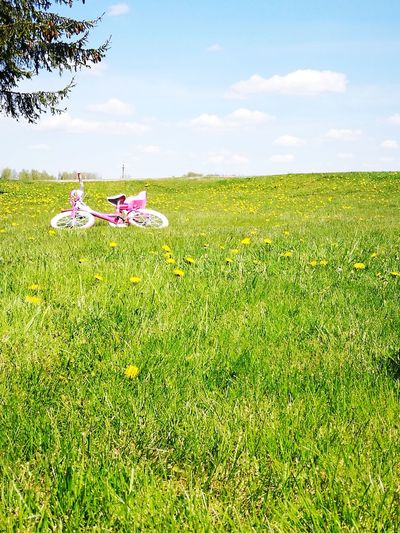 Grass Field Day Nature Outdoors Freshness Sky Beauty In Nature No People Bicycle Pink Color