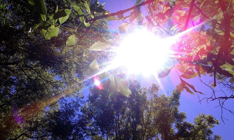 Sunbeam Low Angle View Sun Lens Flare ScenicsTree Sunny Forest Branch Beauty In Nature Silhouette Nature Sky Sunlight Outdoors Back Lit Growth Star - Space Day No People Beautiful Nature Blossom Summer First Eyeem Photo