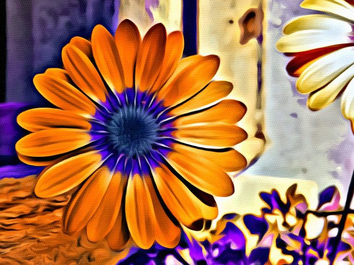 Edited Version of last photo I posted. I love the color combinations in this. Check This Out Flowers EyeEm Nature Lover Paint Program IPhoneography IPhoneographer Creative Photography CreativePhotographer Springtime Nature Photography Bendoregon Hello World