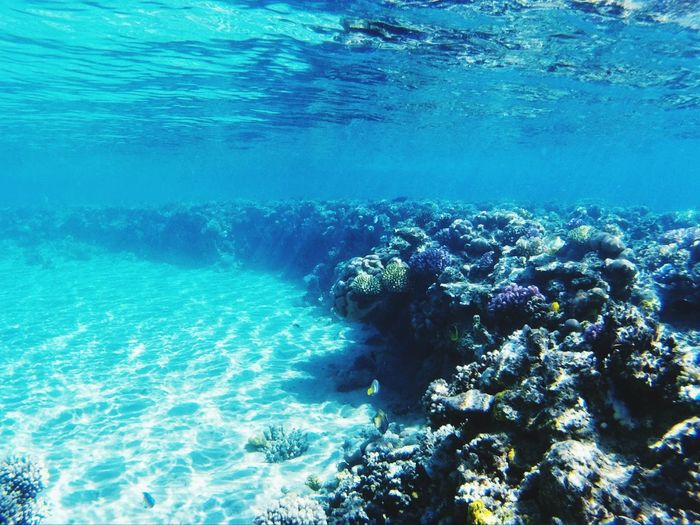Underwater Blue Sea UnderSea Sea Life Water Beauty In Nature Coral Nature No People Underwater Diving Ecosystem  Day Travel Traveling Egypt Ras Mohamed Egypt EyeEm Travel Photography EyeEm Best Edits EyeEm Best Shots - Nature EyeEmBestPics EyeEm Best Shots Adventure Beauty In Nature