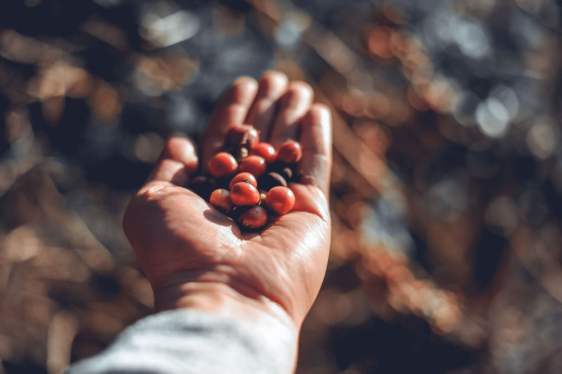 Cropped hand of man holding berries