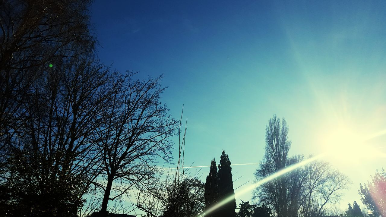 tree, bare tree, sky, no people, silhouette, blue, nature, branch, tranquil scene, tranquility, outdoors, low angle view, beauty in nature, clear sky, day, growth