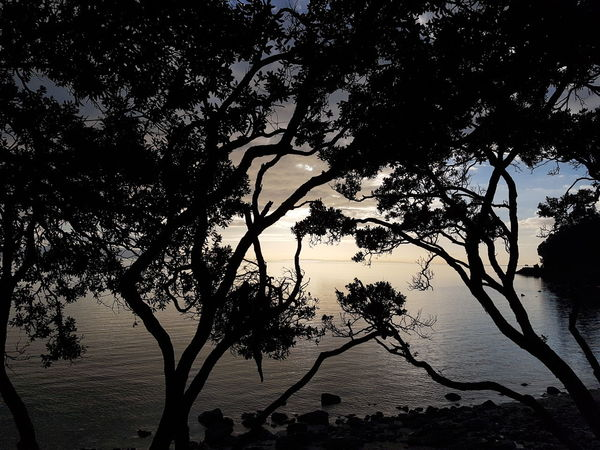 Fading sunlight on the Firth of Thames. Light And Shadow Silhouette Trees And Sky Sea And Sky 2016 06 20