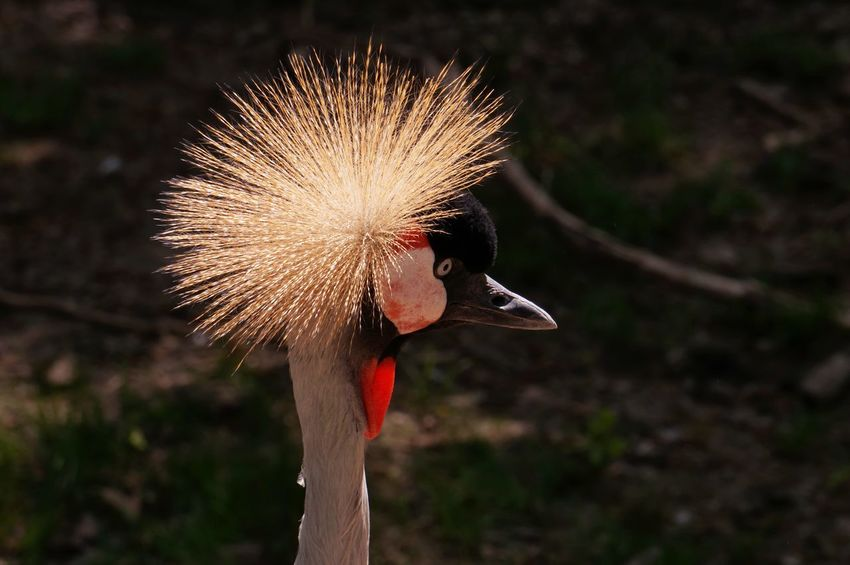Omaha Zoo Bird