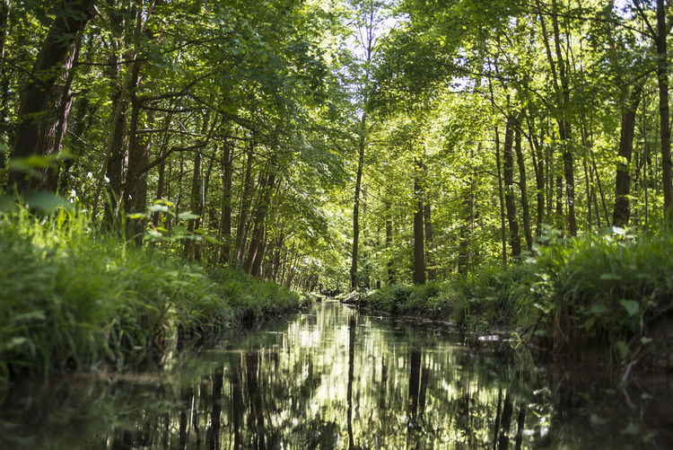 Beauty In Nature Creek Day Forest Nature No People Outdoors Reflection Tree Tree Water Wilderness