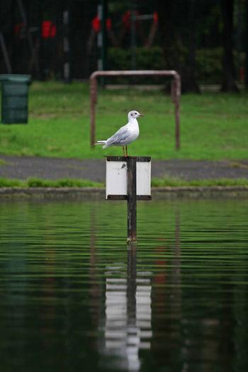 Gull sitting on