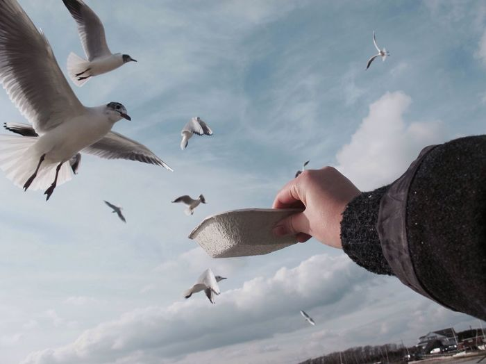 Cropped hand holding bowl over birds against cloudy sky
