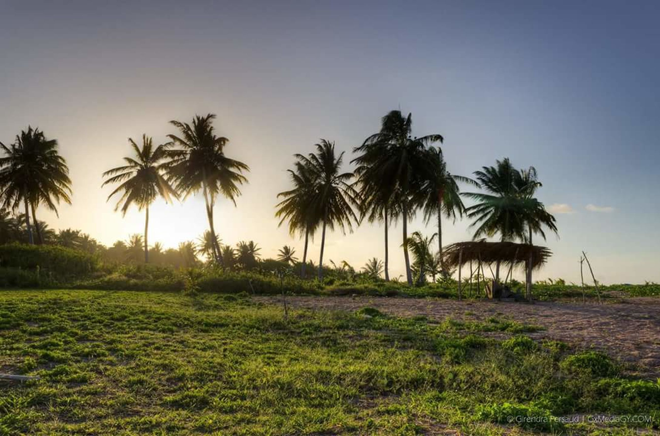 palm tree, landscape, sunset, agriculture, tree, nature, growth, scenics, rice paddy, travel destinations, outdoors, no people, tropical climate, beauty in nature, sky, water, day