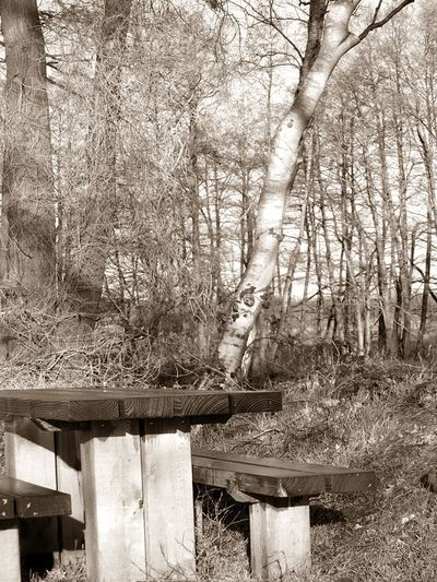 EyEmNewHere Day Nature No People Outdoors Picknickbench Sepia Tree Woodlands