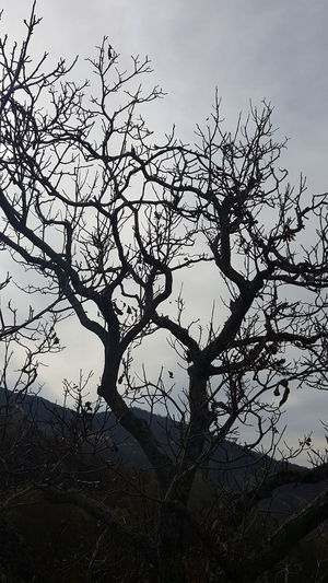 Leafless tree ||| Mountain No Filter, No Edit, Just Photography MyPhotography Tree Nature Sky Silhouette Beauty In Nature Branch Tranquil Scene Calm Tranquility Scenics
