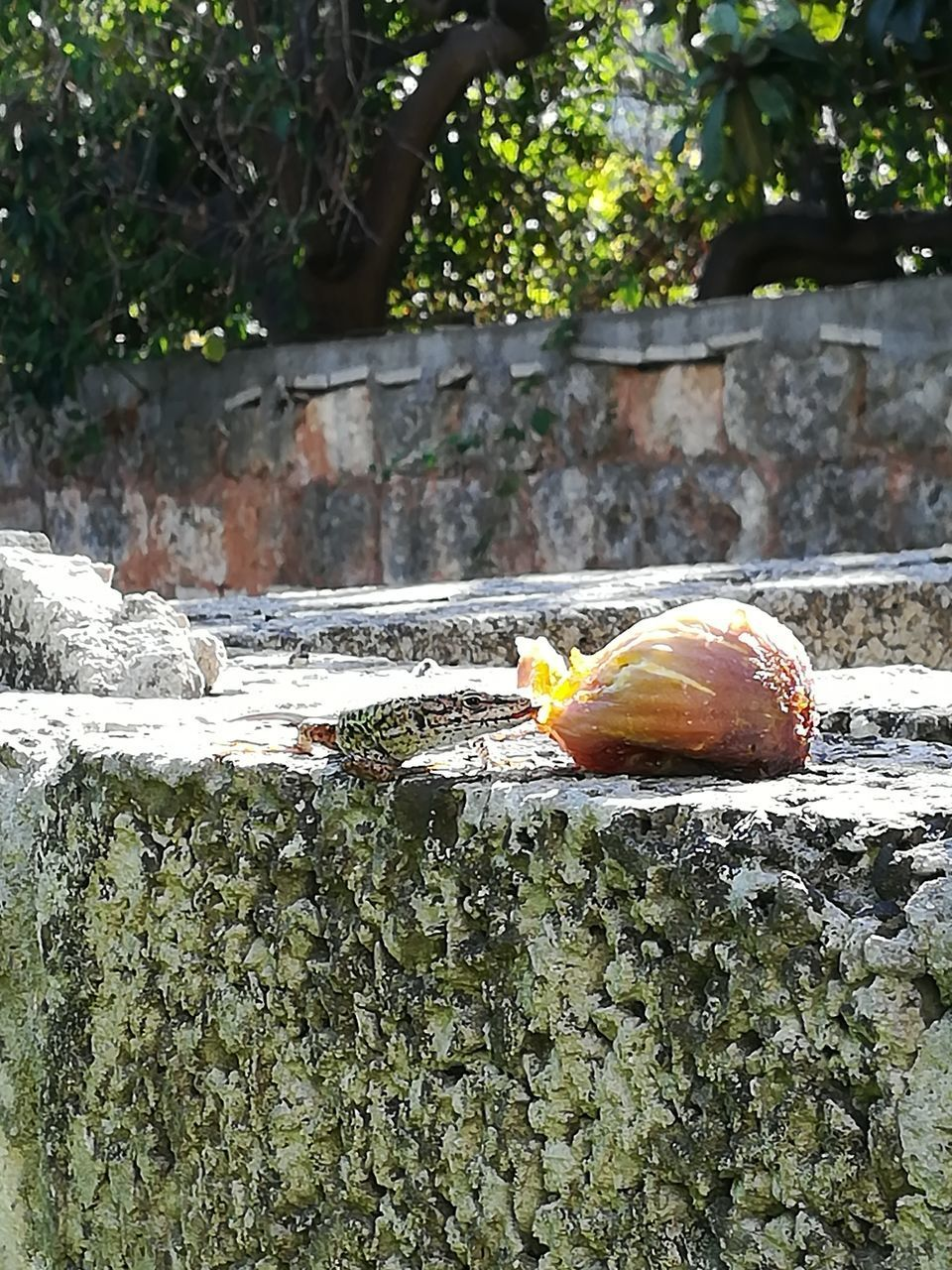 day, no people, plant, animal wildlife, one animal, animals in the wild, animal, outdoors, nature, animal themes, close-up, tree, focus on foreground, wall, orange color, mollusk, retaining wall, animal shell, architecture, growth